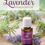 10-Uses-for-Lavender-Essential-Oil