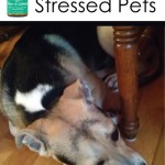 Essential Oils for Stressed Pets || TheSimplePen.com